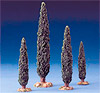 5 Inch Scale Cypress Trees by Fontanini