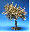 5 Inch Scale Small Olive Tree by Fontanini